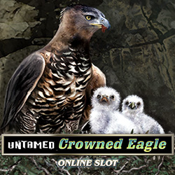 Untamed Crowned Eagle_2