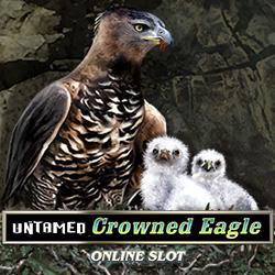Untamed Crowned Eagle_2