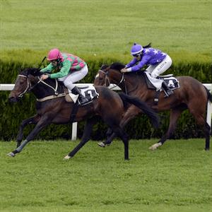 Las carreras de caballos impulsan el sector español de las apuestas